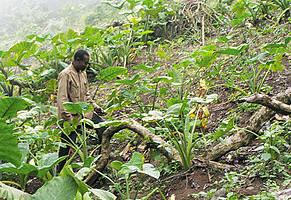 Lowongan Sarjana Pertanian Kerja Apa dan Dimana ?