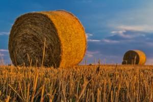 Tips Membeli Tanah untuk Investasi